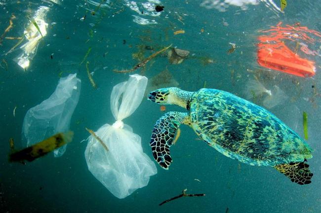 ทุนป.โทลดพลาสติกในทะเล